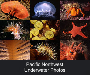 Pacific Northwest Underwater Photos