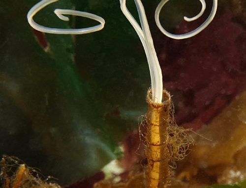 Jointed Three-Section Tubeworm