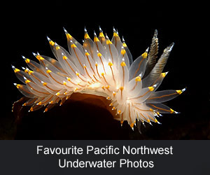 Favourite Pacific Northwest Underwater Photos