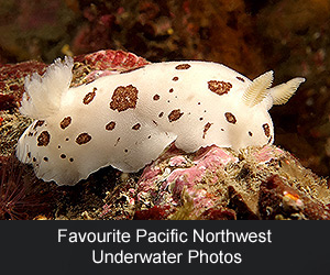 Favourite Pacific Northwest Underwater Photos